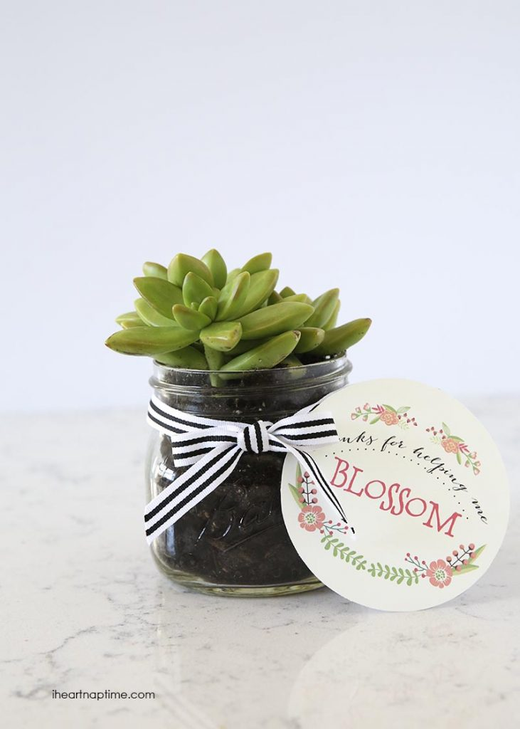 teacher-appreciation-succulent-mirabellecreations